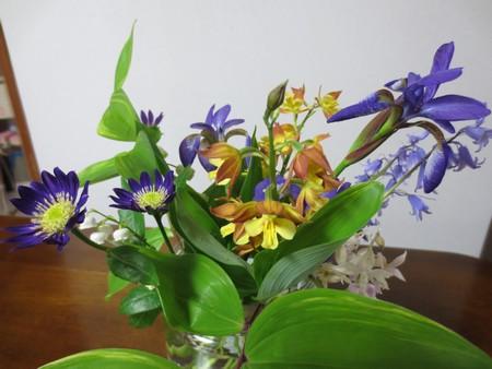 花たち 代替